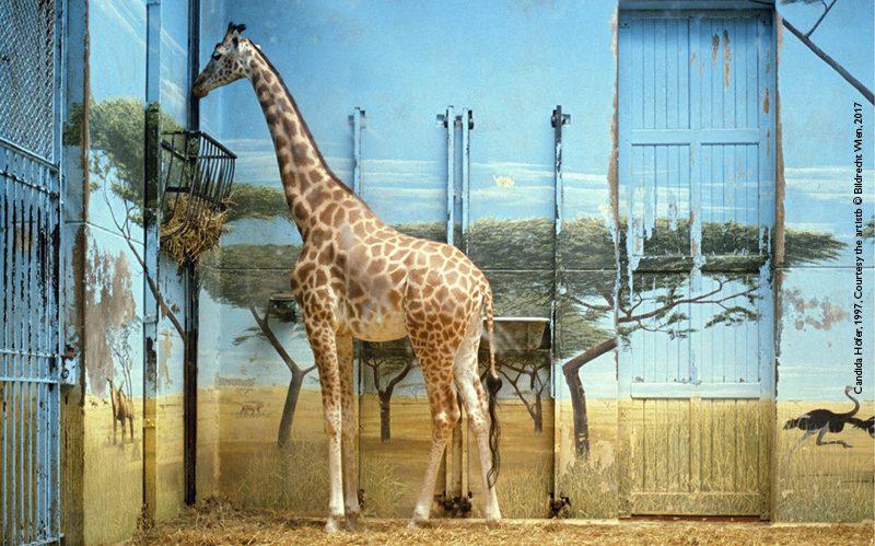 Candida Hörer, Zoologischer Garten Paris II, 1997 Edition 3/6 Farbfotografie, 26 x 37 cm Courtesy the artist © Bildrecht Wien, 2017